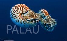 Palau / Micronesia