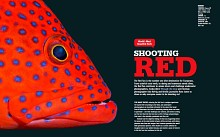 Shooting Red