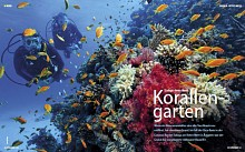 Safaga/Red Sea - Korallengarten