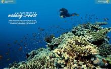 Coral Garden, Red Sea