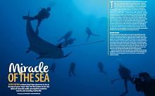 Palau - Miracle of the sea